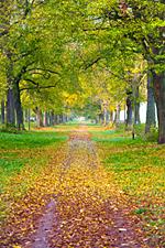 Genießen Sie mit unserer Wellnessmusik den goldenen Oktober